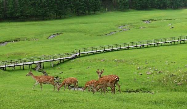 黑龙江鲜为人知的生态旅游地,空气极其清新,森林小鹿相映成趣