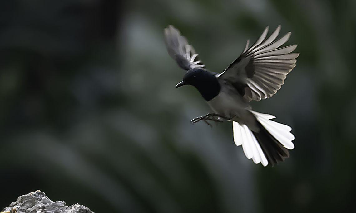 打鸟摄影:美丽的四喜鸟捉到了美味的小虫虫,美景美味