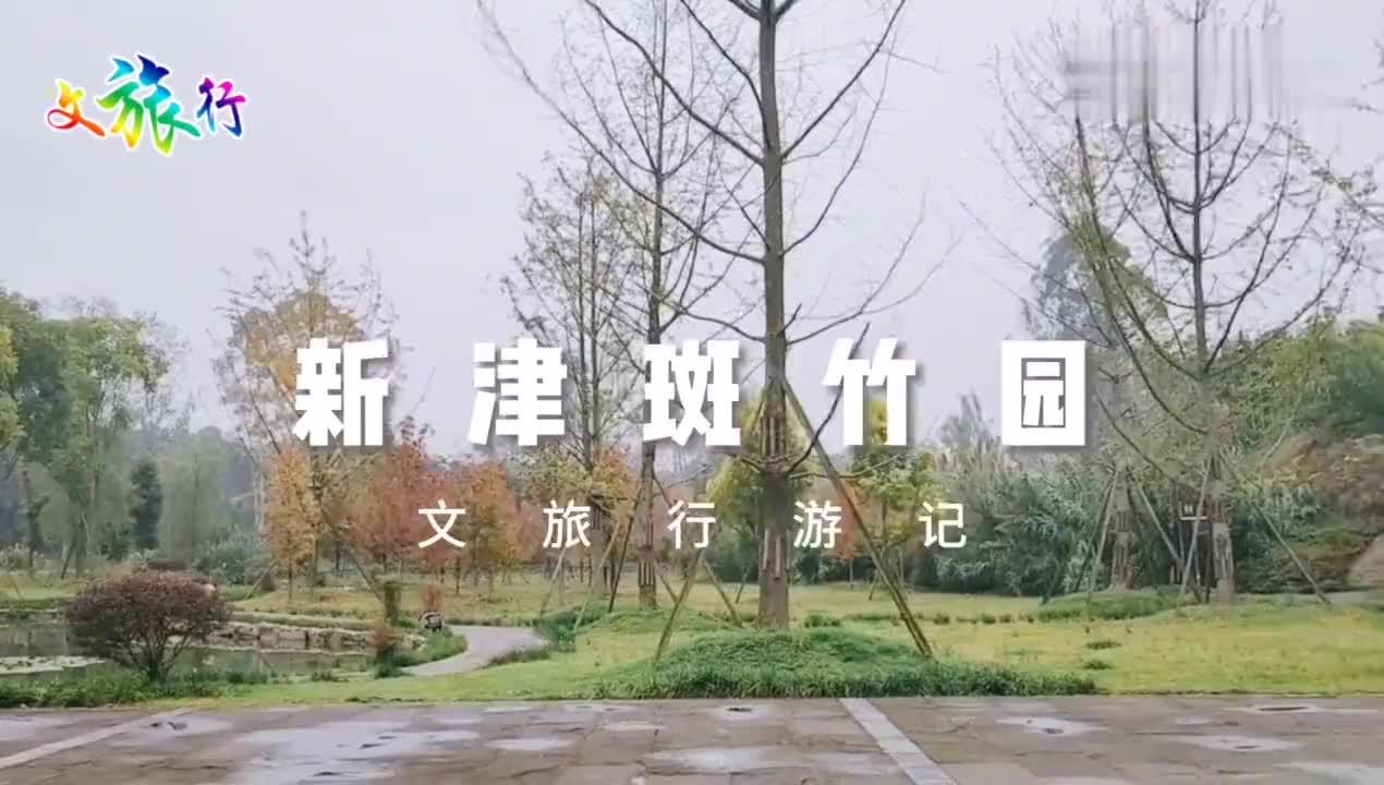 实拍成都新津斑竹园免费入园天然氧吧和宜宾蜀南竹海有得一拼