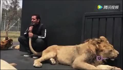 实拍-男子拿着雄狮尾巴当作话筒唱歌你敢吗