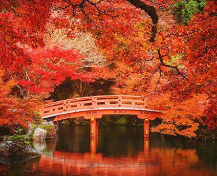 日本京都醍醐寺的秋枫,美爆了的那种!