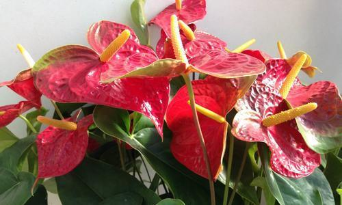 最罕见的3种花,密林丛花烛榜上有名,你见过几个?