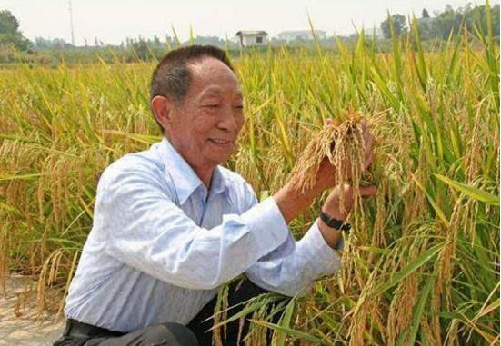 """四川会出现粮食紧缺吗?官方回应来了:""""手中有粮""""莫要慌!"""