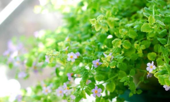 四个简单超有效的养花技巧,既能对付叶子发黄,又能杀虫施肥