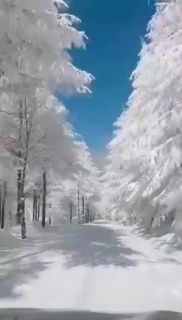 大湖北的神农架林区下雪之后就是美美的一发不可收拾