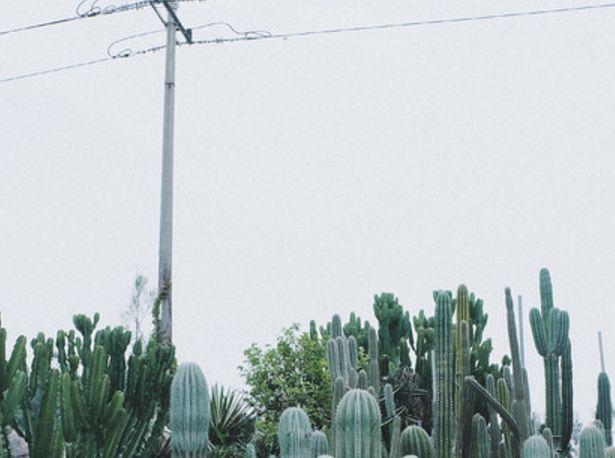 """旅游:厦门园林植物园——福建第一个植物园,俗称""""万石植物园"""""""