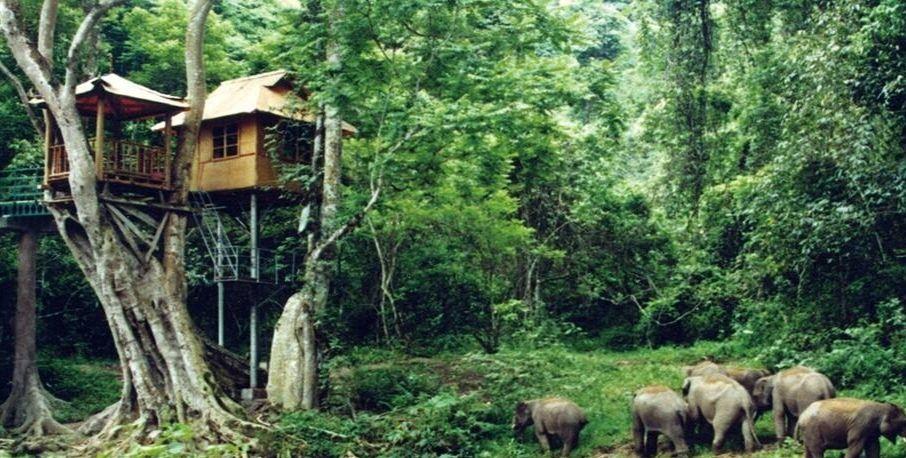 这里有全国保存最完整的原始森林,风景优美,傣族风情浓厚