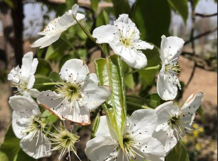 春回万物生,来说说这些在农村土地上生长的农作物你能认识几种?
