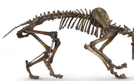 地球上最神奇的四种哺乳动物,不是灭绝了就是濒临灭绝!