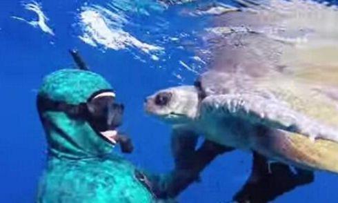 海龟为了报答潜水员的救命之恩,竟主动求拥抱