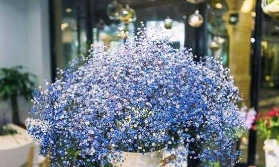 喜欢养花,不如养盆斯蒂芬男爵,增加湿度,净化空气,美观大气