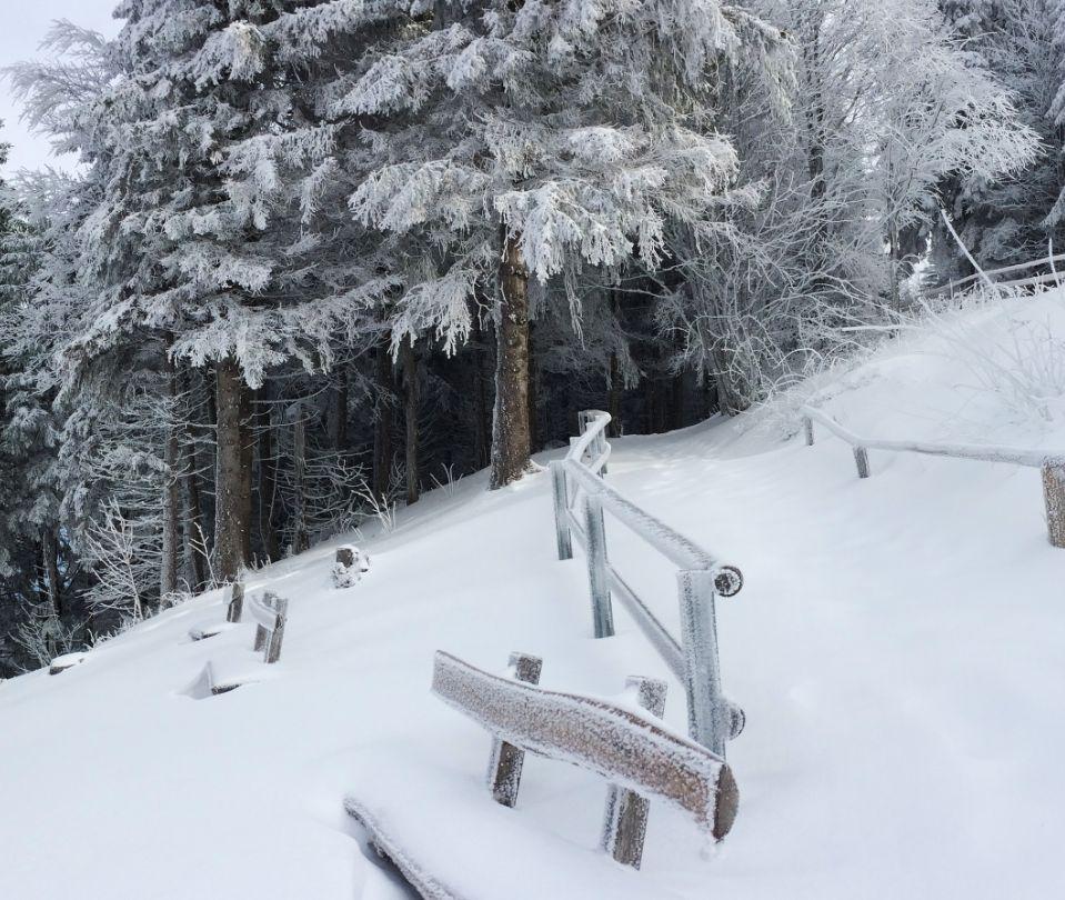 山上有着很多的积雪,这里的风景很是优美,一片生机勃勃的景象