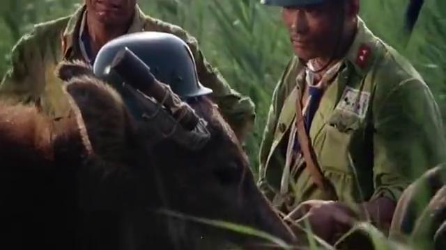 三毛从军记:这头黄牛厉害了,前戴头盔后配鞭炮!头角还顶手榴弹