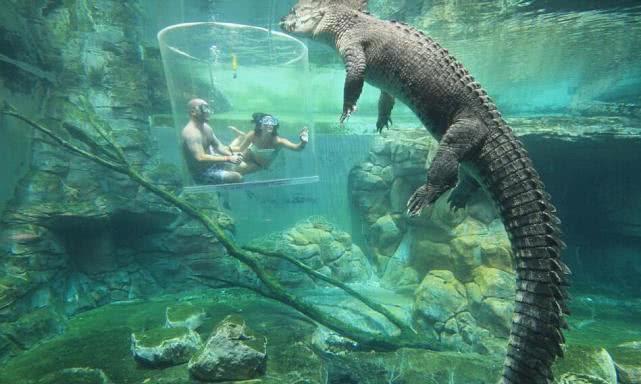 """游客花8百多体验死亡之笼,在水下与5米长的食人鳄""""亲密接触"""""""