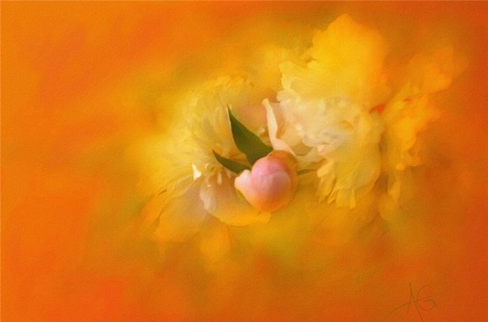 静听花开的声音,慢嗅幽幽的清香:画家阿尔贝托吉兰的美妙水彩选