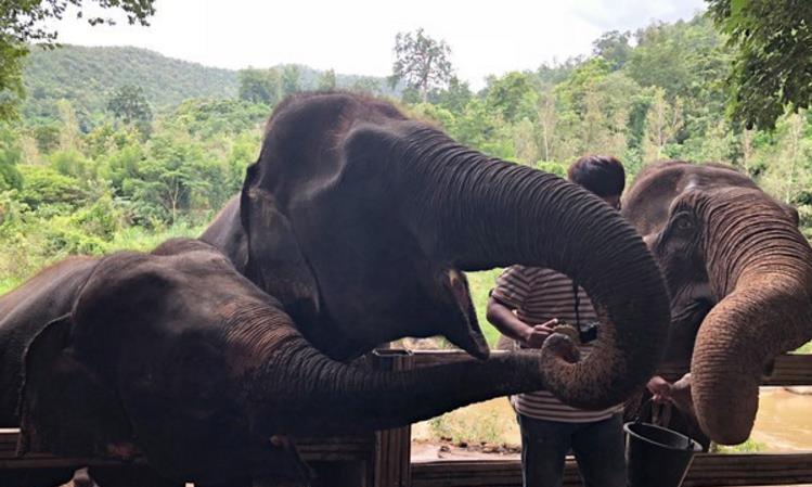 救助大象,100块一杯的象屎咖啡,你愿意买吗?