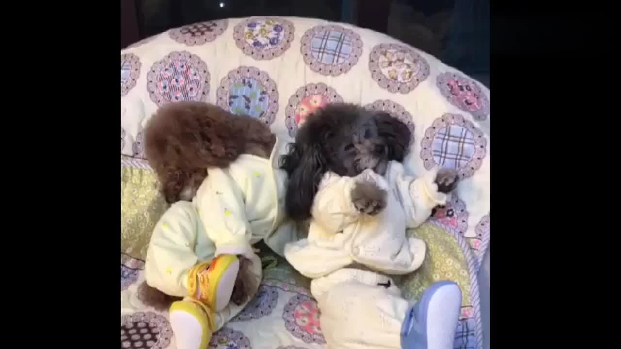 爸爸回家后看到的这一幕,太有爱,网友:崽崽兄弟俩的睡姿没谁了