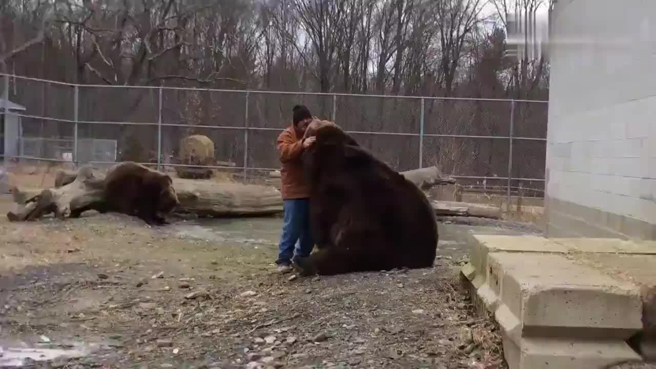 大叔要走了,棕熊舍不得大叔,拉着大叔的袖子不让他走,真会撒娇