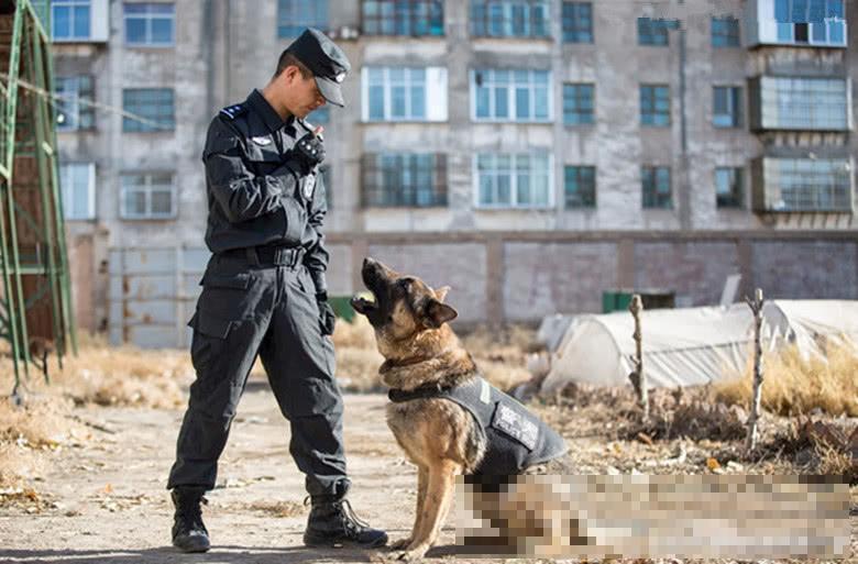 正在练习的警犬,个个都精神头十足,唯独一只:很呆萌