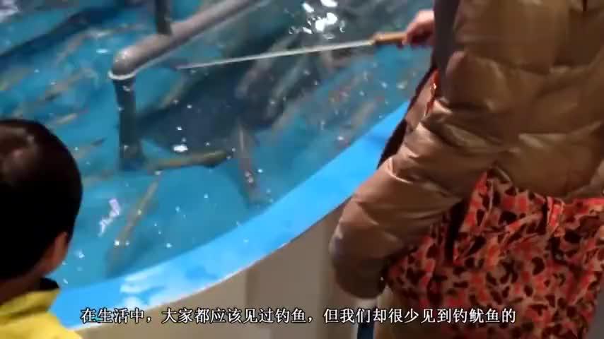 老板:谁能吊起来鱿鱼,厨师免费给做,网友:这么吃没寄生虫吗