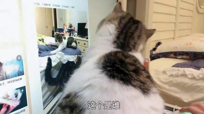 小猫咪玩电脑上瘾,主人劝阻无效果断放绝招:跟我斗,你还嫩着呢