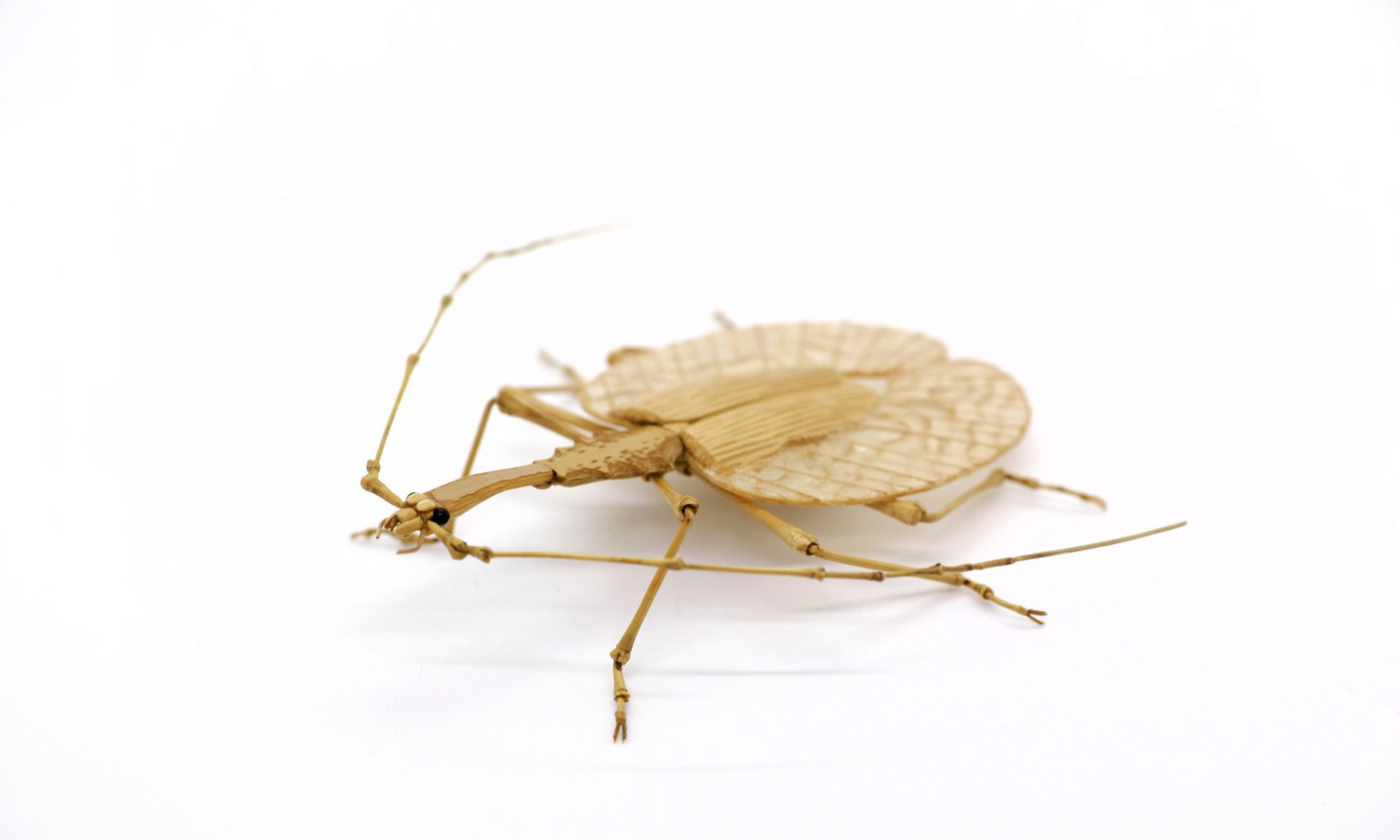 """这些昆虫是真的""""标本""""吗?几乎看不出破绽"""