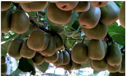 90后残疾小伙拼多多卖水果,三月卖4000万,还优先收残疾人的农货