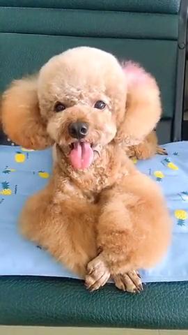 见过这也会笑的小狗狗么