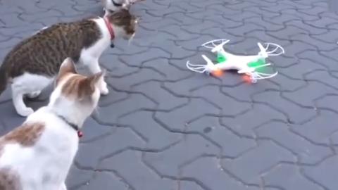 一群猫咪围攻无人机,无人机一动全怂了!