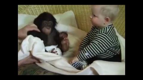 小宝宝遇上猴宝宝,两个小萌物瞬间开始好奇互动,真是两个活宝!