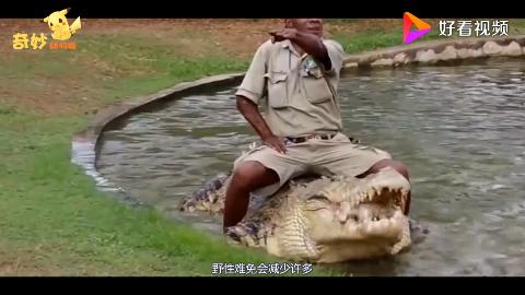 巨型鳄鱼在动物园横行霸道饲养员都小心接触网友这么大的