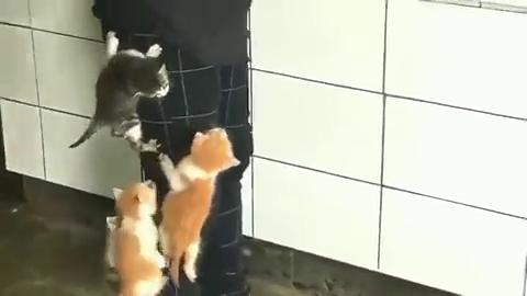 五只小猫咪饿了,竟爬到主人身上找吃的,萌爆了