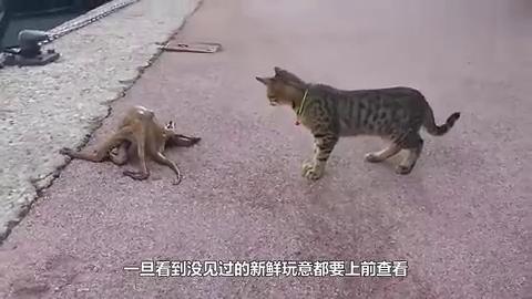 丧心病狂的铲屎官给猫吃榴莲,猫咪吃第一口就张开嘴巴吐,太萌了