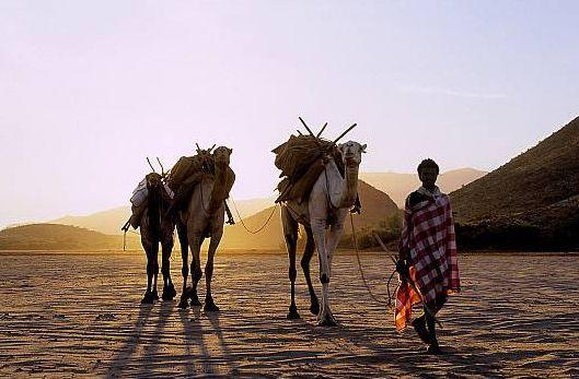 """「肯尼亚的著名景点」野象天堂""""桑布鲁"""""""