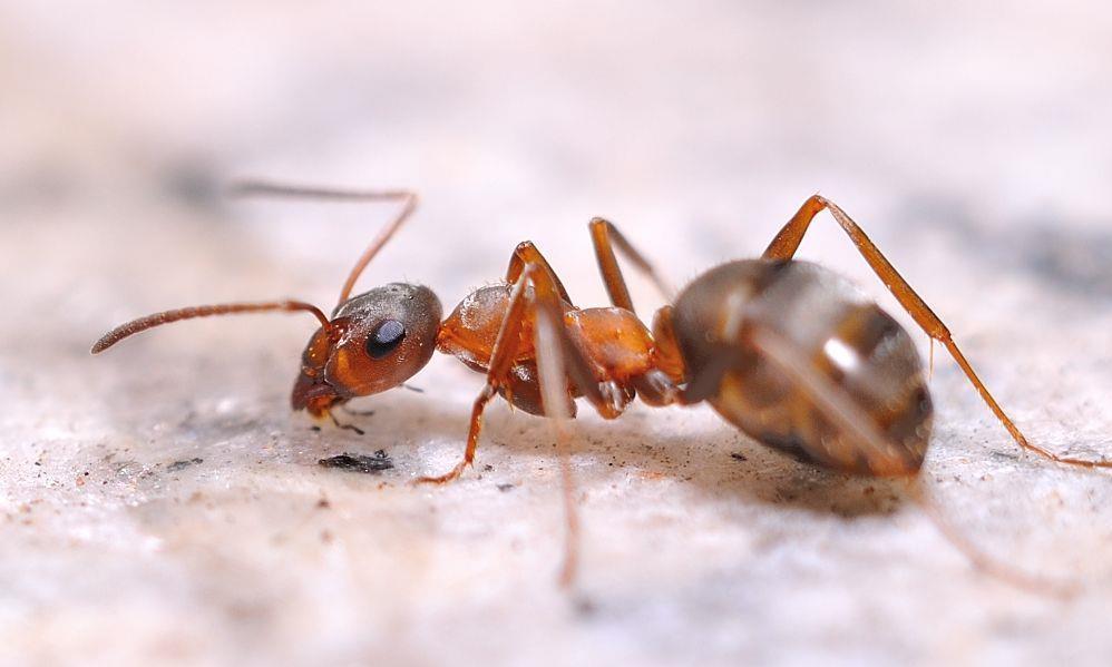 蚂蚁是二维空间的生物吗?宇宙中还存在不同维度空间!