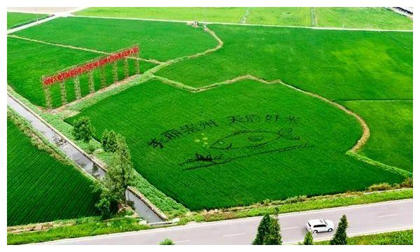 2019四川星级现代农业园区名单来了! 35个园区榜上有名