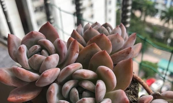 在多肉植物的花盆上铺上沙子,能防蚊虫,不烂根!