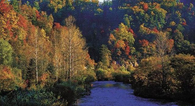 小兴安岭原始森林公园图片