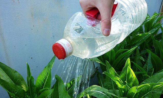 """浇花时,别只用自来水!用这2种""""废水""""浇花,轻轻松松爆满盆!"""