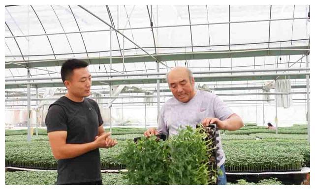 年育种苗500多万棵,30岁的他将小种苗育成大产业