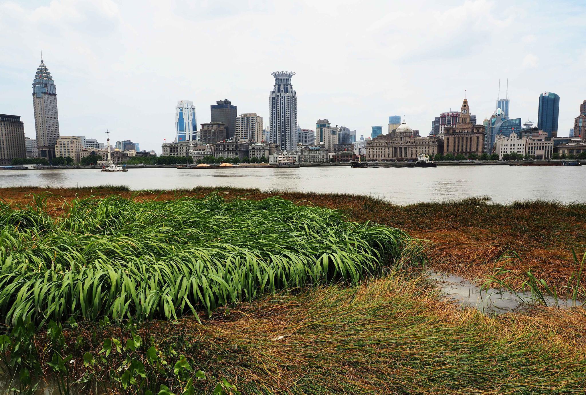 来上海先到哪里,自然是外滩了,小满带您去百年外滩看看