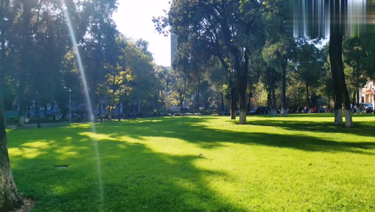 云南大学里的最美风景,我觉得可以达到5A级景区了,看这校园多美