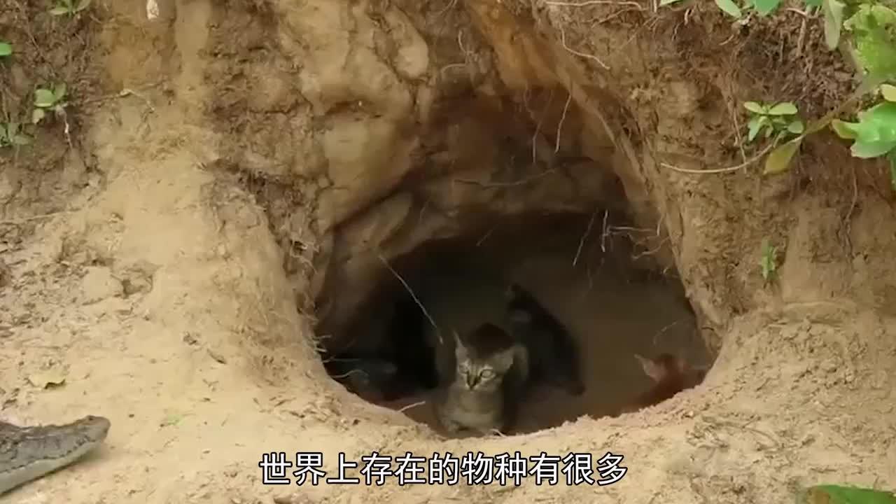 泪目小犀牛为保护妈妈不受伤害用自己的小身躯驱赶偷猎者