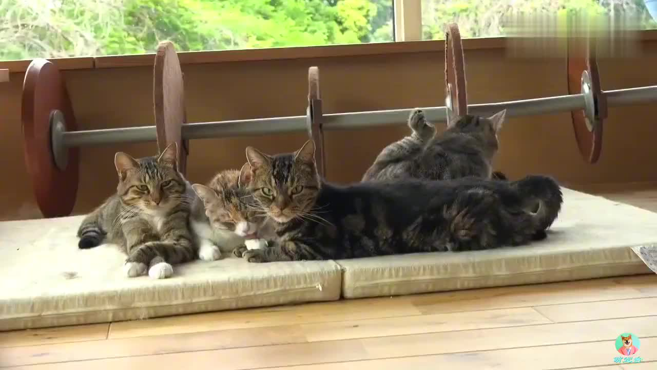 猫咪集体在床垫上午休,一脸岁月静好,真羡慕它们的感情