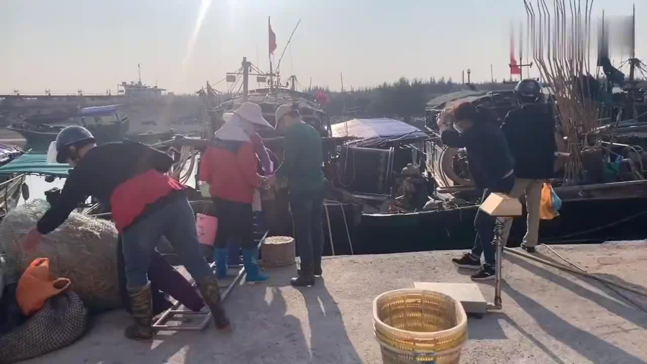 湛江乾塘码头渔民出去赶海回来那么多人围观去看看有什么靓野