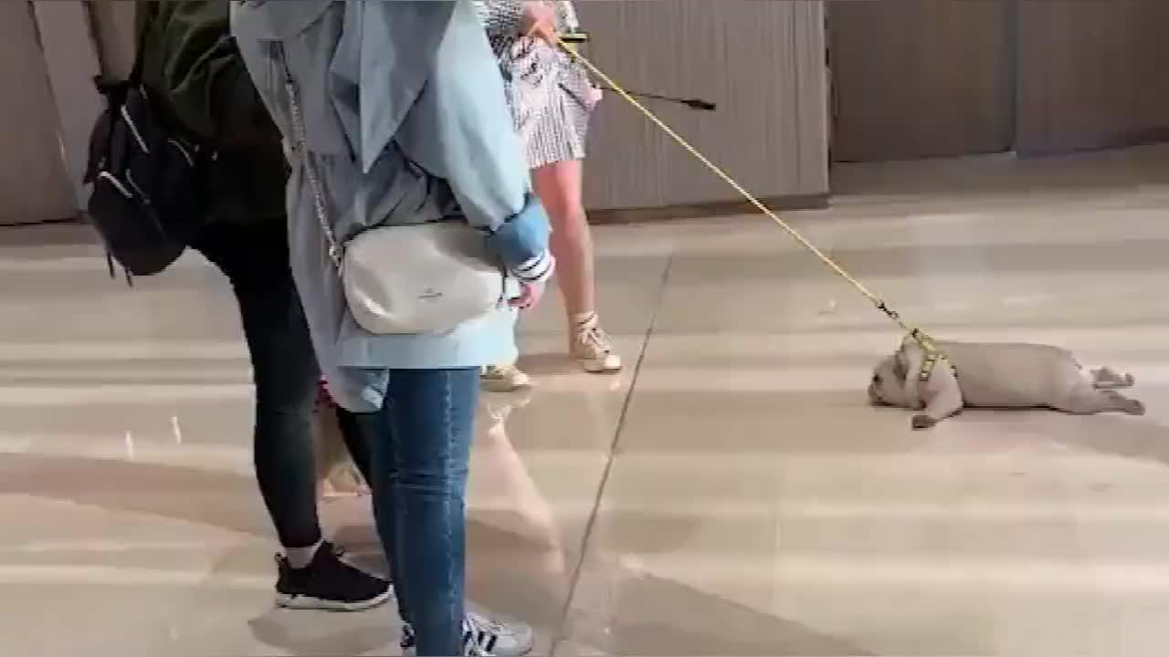 狗狗跟主人逛超市没想到用这种方式偷懒看样子少不了挨顿揍了