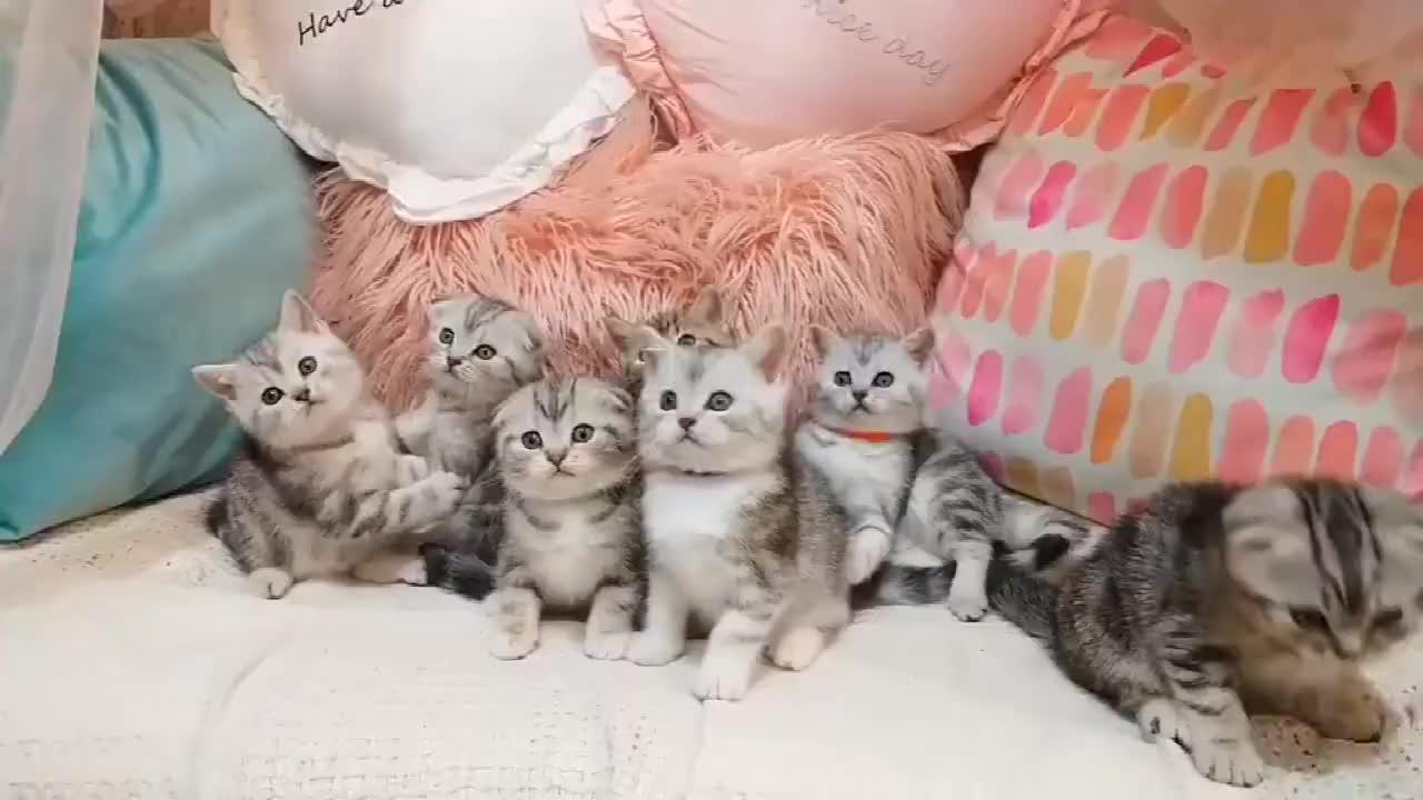 看看这群小奶猫盯着东西一直转看着都想去偷一只