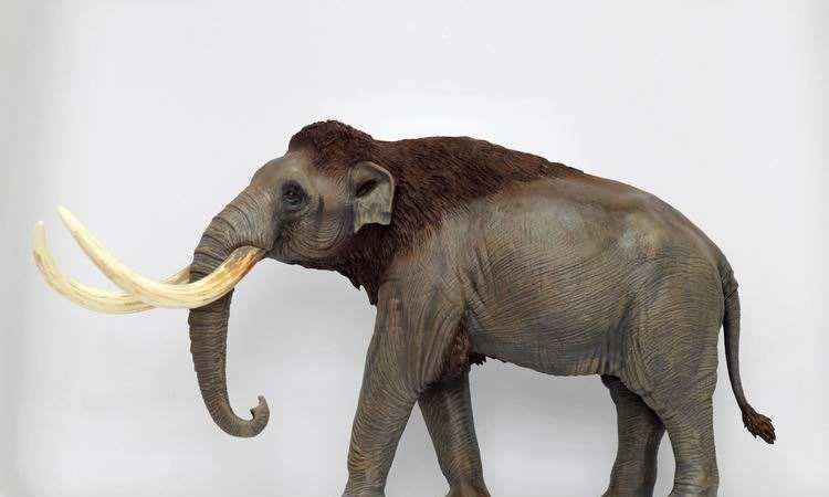 最大的猛犸象其实出自中国,体型是现在亚洲象的三倍