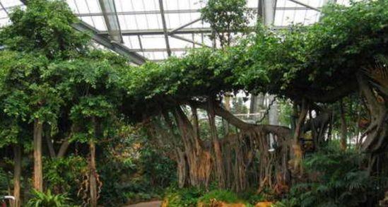 """中国科学院华南植物园:被誉为""""中国南方绿宝石"""""""