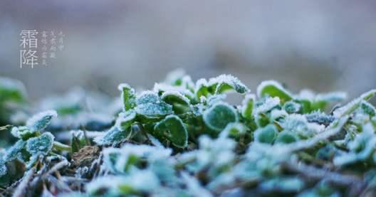 2019霜降是几月几日哪一天开始 霜降朋友圈说说祝福语文案怎么写